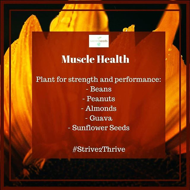 We have over 600 muscles in our bodies and they help us lift things, move, pump blood through our bodies, see, breathe, talk, walk, and more. To stay strong, healthy muscles require enough rest, nutrition, and exercise. Work toward a strong future by planting for muscle health. #cultivate #healthyliving #health #Strive2Thrive #gardeningtips #gardening