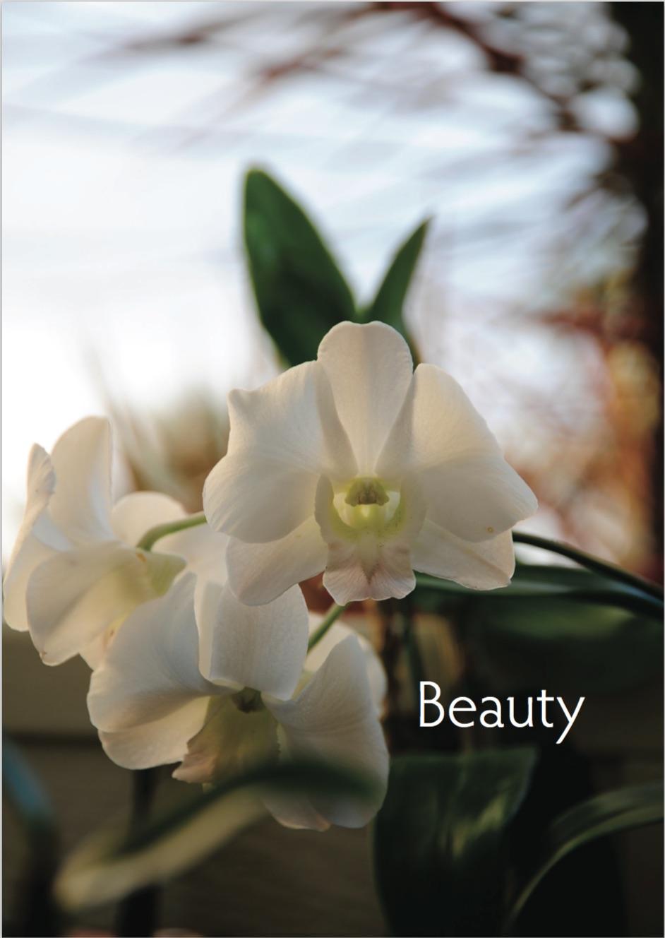 Beauty Cover JPEG.jpg