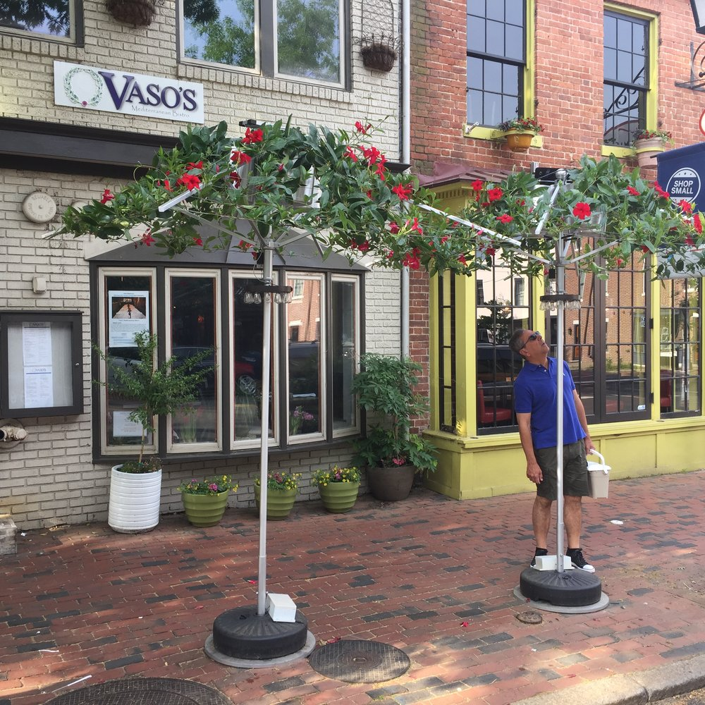Vaso's Greek Bistro in Old Town Alexandria, Virginia at 1118 King St.