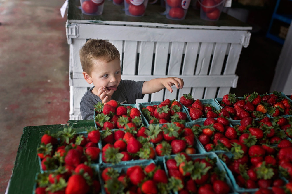 2 year old tries to pilfer a strawberry at a farm market
