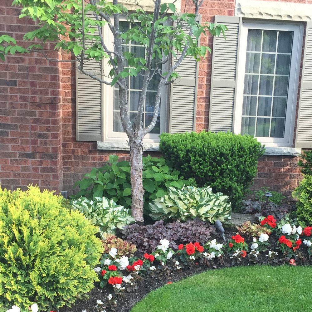 gallery-service-softscaping-tree.jpg