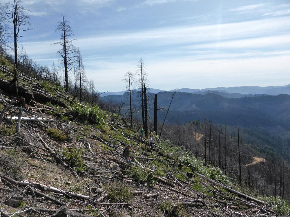 Establishing field plots in southwestern Oregon