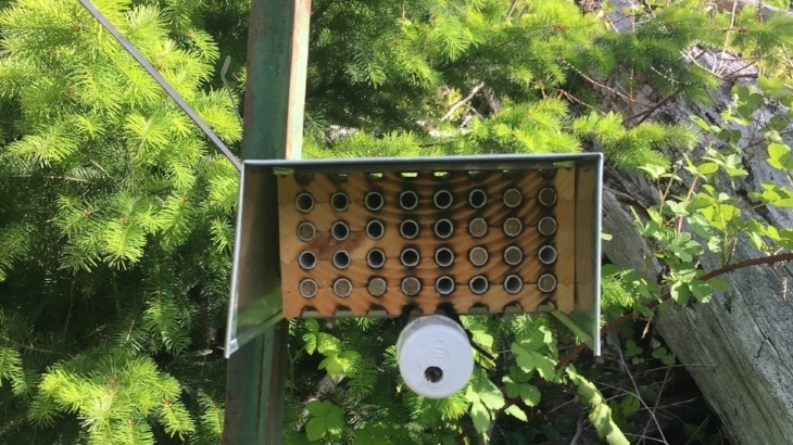 We are using    Osmia lignaria  nests to measure bee reproductive output in managed forests