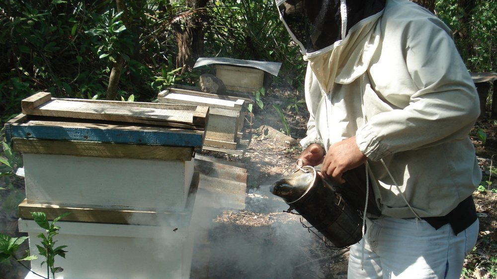 A beekeeper demonstrates his apiculture techniques in the Nicoya Peninsula, Costa Rica
