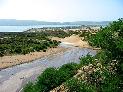 Tomales Dunes - from website.png
