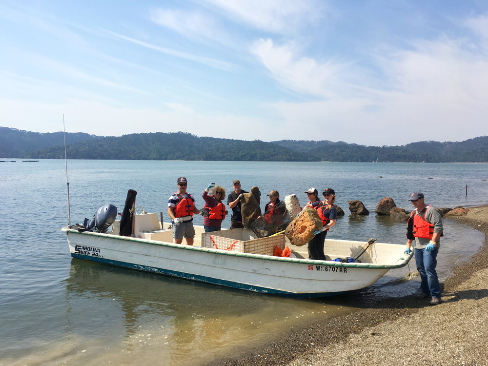 Coastal Clean Up on Tomales Bay 2017.  Hog Island Oyster Co. Photo Credit Remy Galvan Hale:Hog Island Oyster Co.jpg