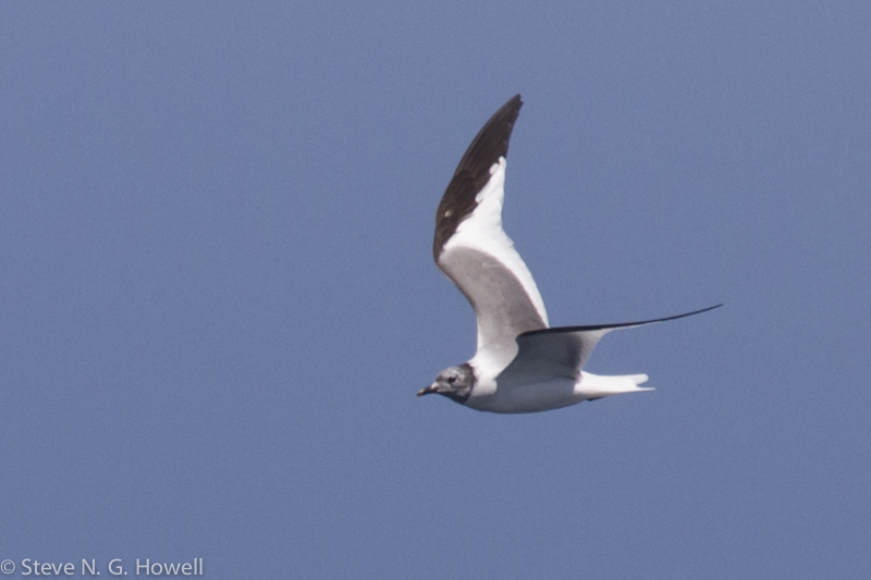 Bodega Bay pelagic (9 of 34).jpg