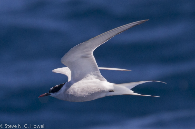 Bodega Bay pelagic (23 of 34).jpg
