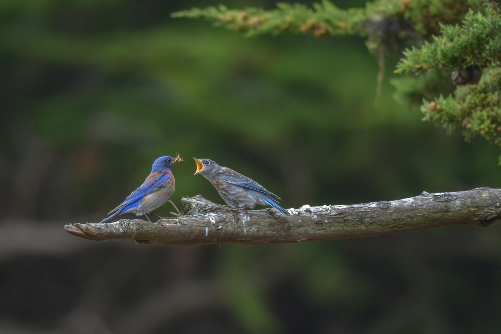 Migratory & Nesting Birds    Marin Recognizes Migratory Birds during 100-year anniversary of landmark Migratory Bird Treaty Act!    Read More