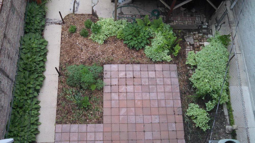 Shared garden.jpg