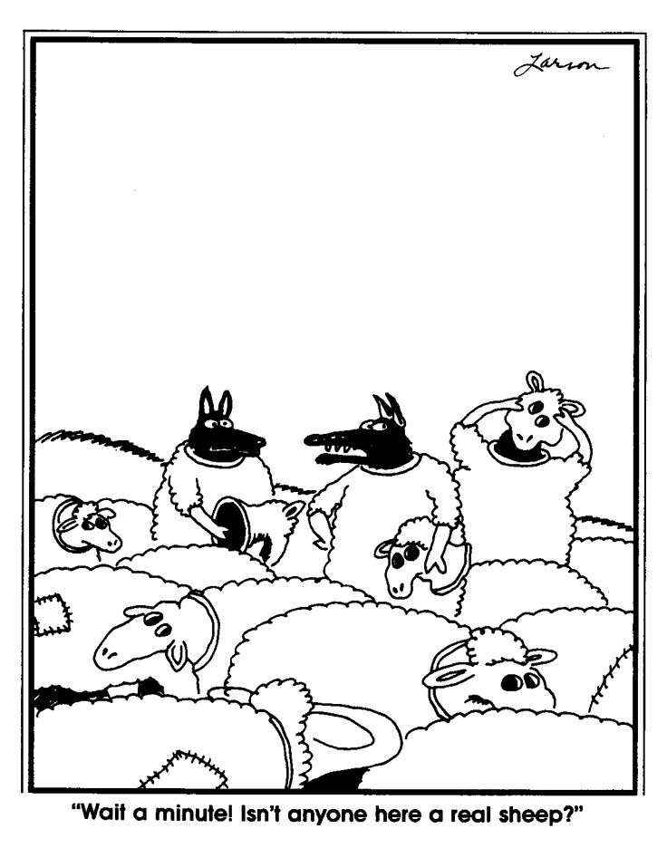 larsen sheep.jpg