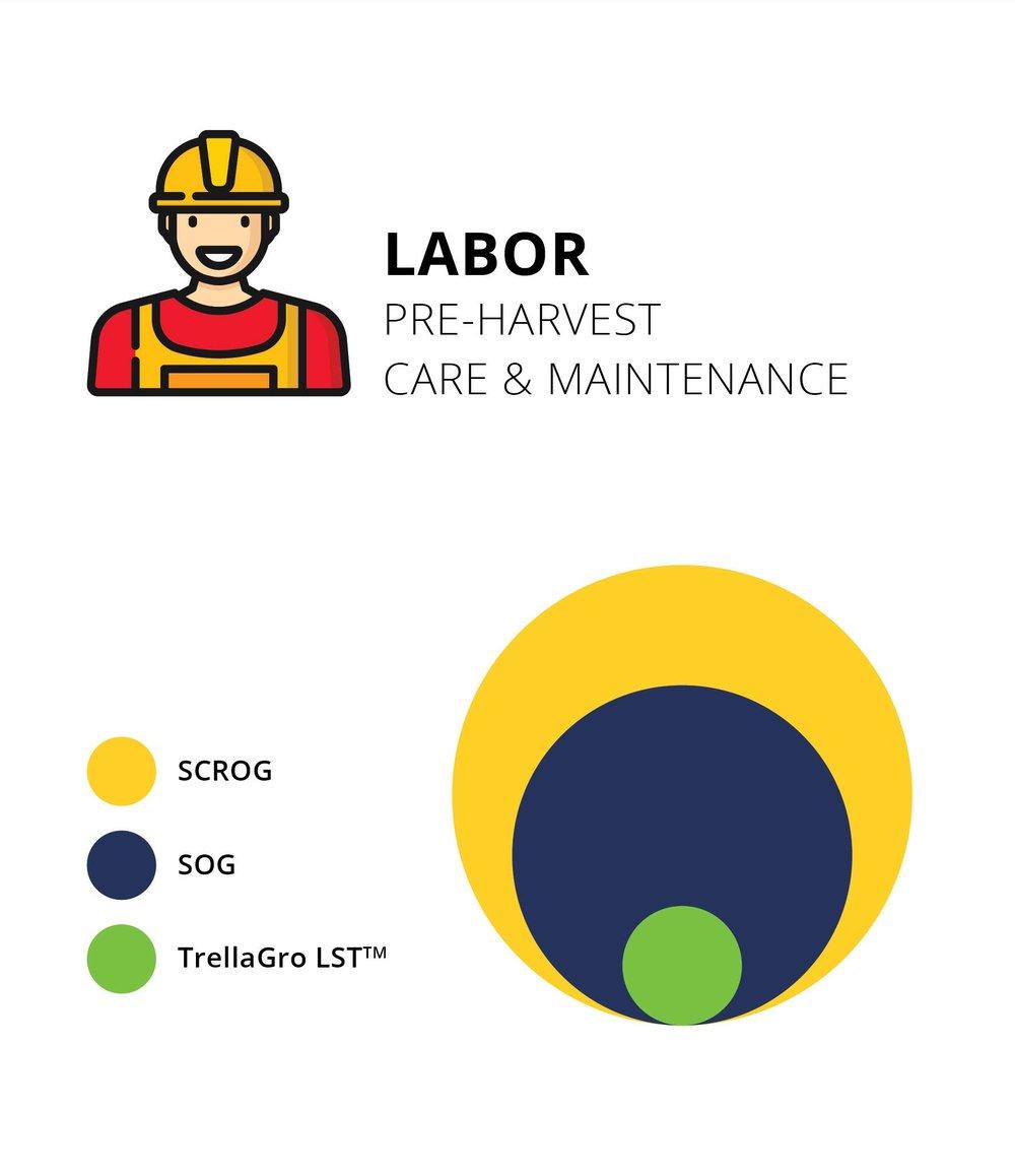 Compare+Labor.jpg