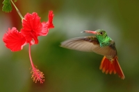 Embrace Your Hummingbird Courage
