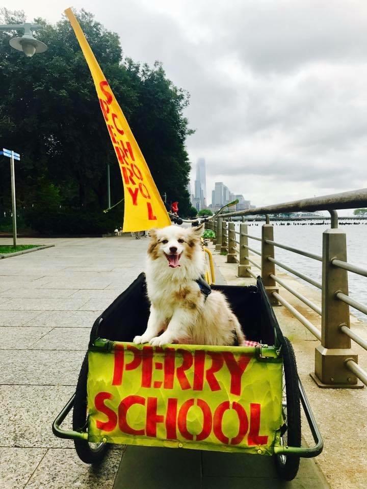 Indie, The School Dog