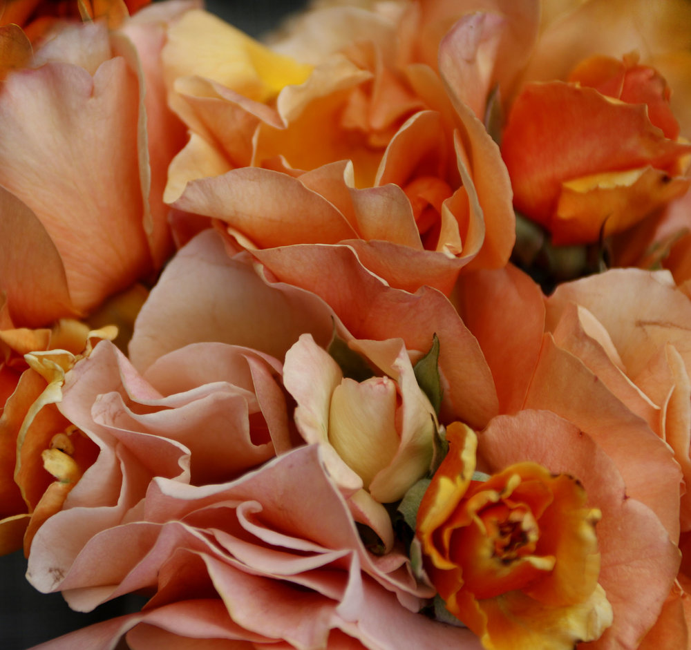 web_orange_roses.jpg