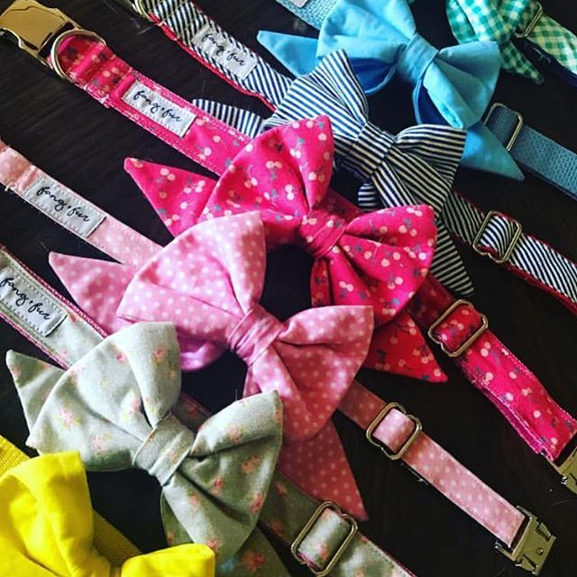When your dog has a badass collection of dog collars... and leashes... and bows. @mad_about_alice we love your style! * * * * * * #supportlocal #faf #temecula #murrieta #supportsmallbusiness #dogsofinstagram #puppiesofinstagram #doglovers  #supportlocal #faf #temecula #murrieta #supportsmallbusiness #dogsofinstagram #puppiesofinstagram #doglovers #supportlocal #dogcollars #collars #dogaccesories #girlboss #womansupportingwomen #dogs #puppies