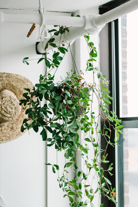 Plants.06.2015.25.jpg