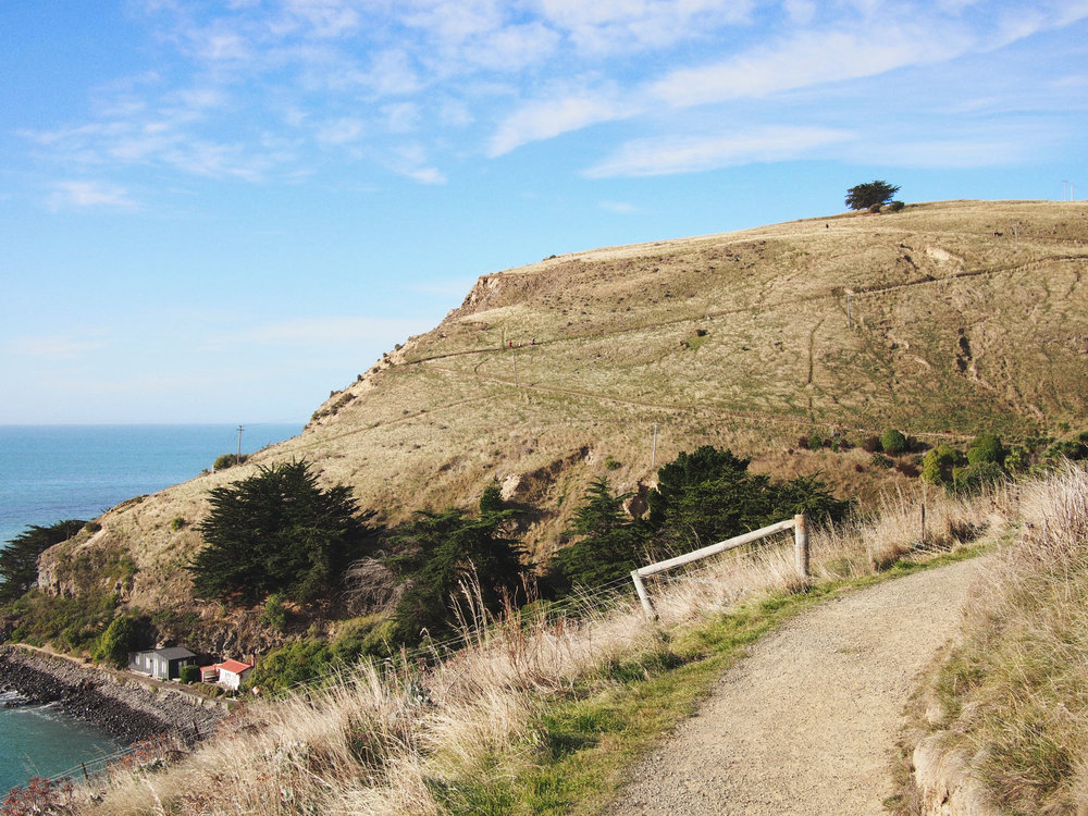 Track to Godley Head.jpg