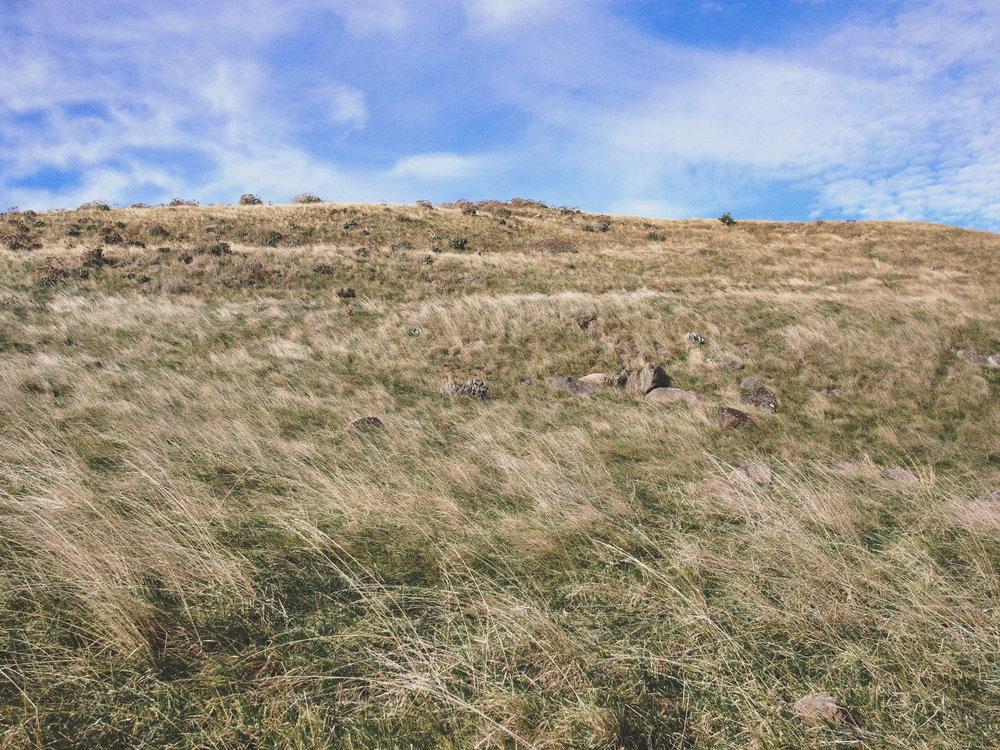Grass Godley Head.jpg