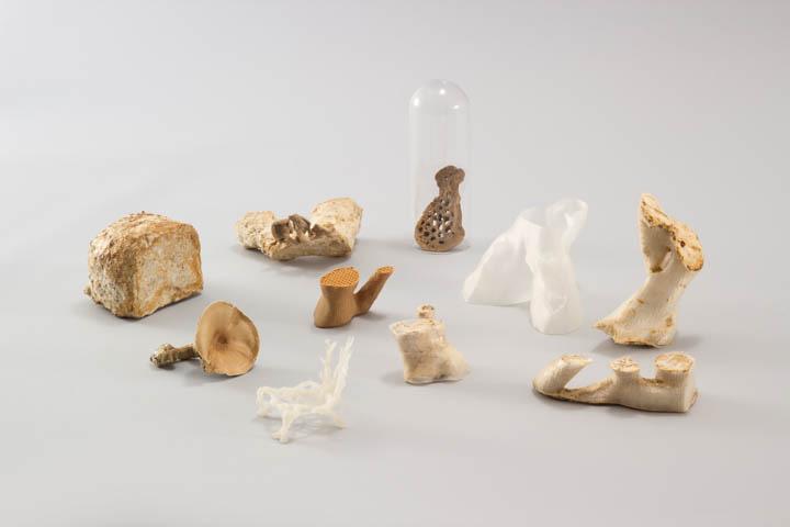 Mycelium Project