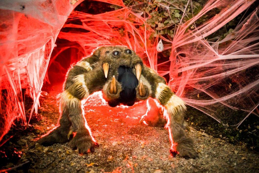 halloween-2018-spider-contortionist.jpg