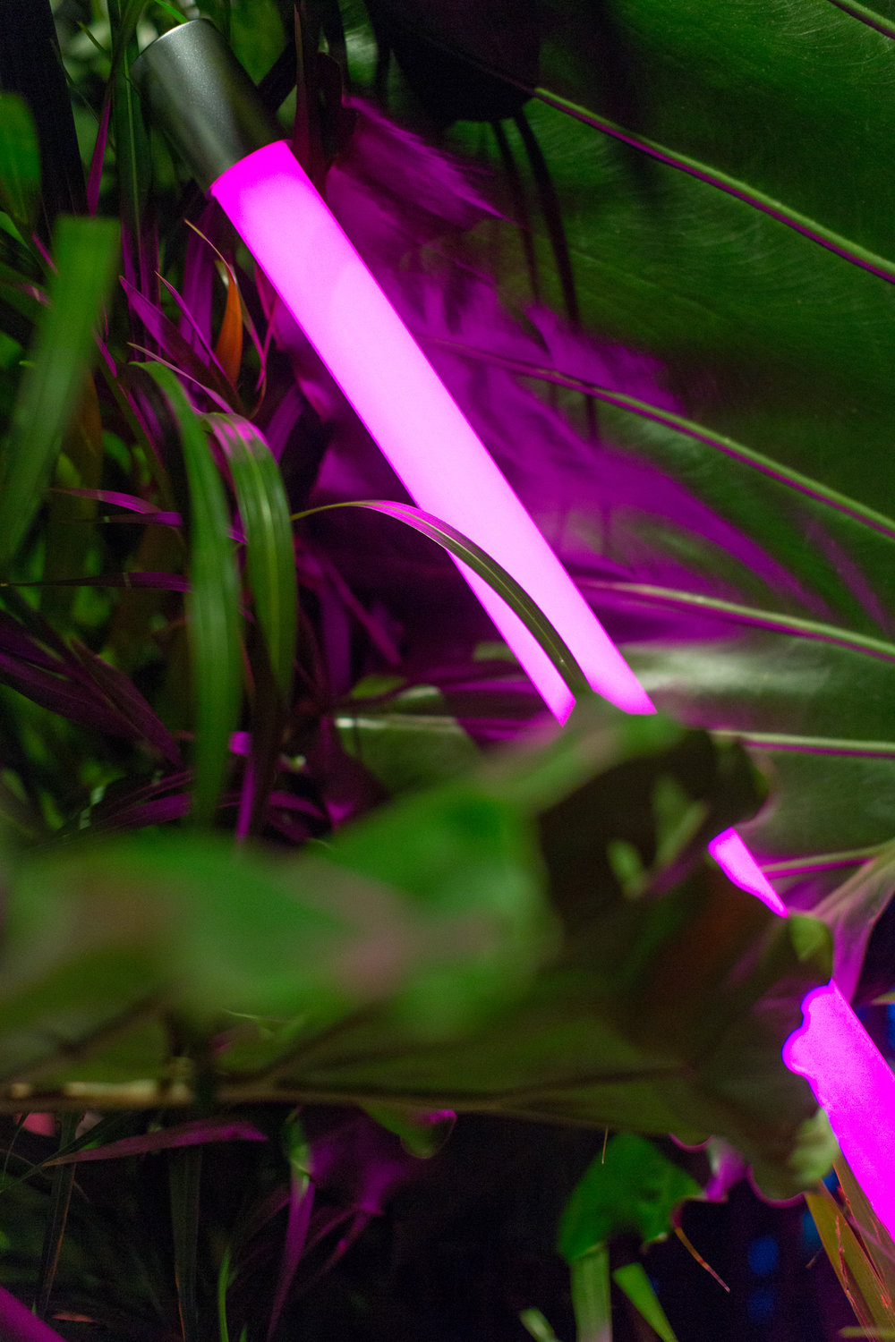 neon and tropical plants 2