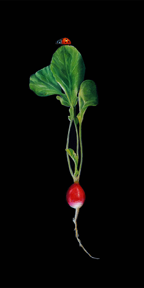 Radish | 8 x 16 | Oil on canvas panel | SOLD