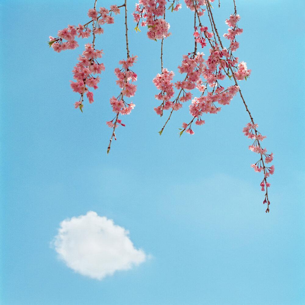 Blossom #1, 2005