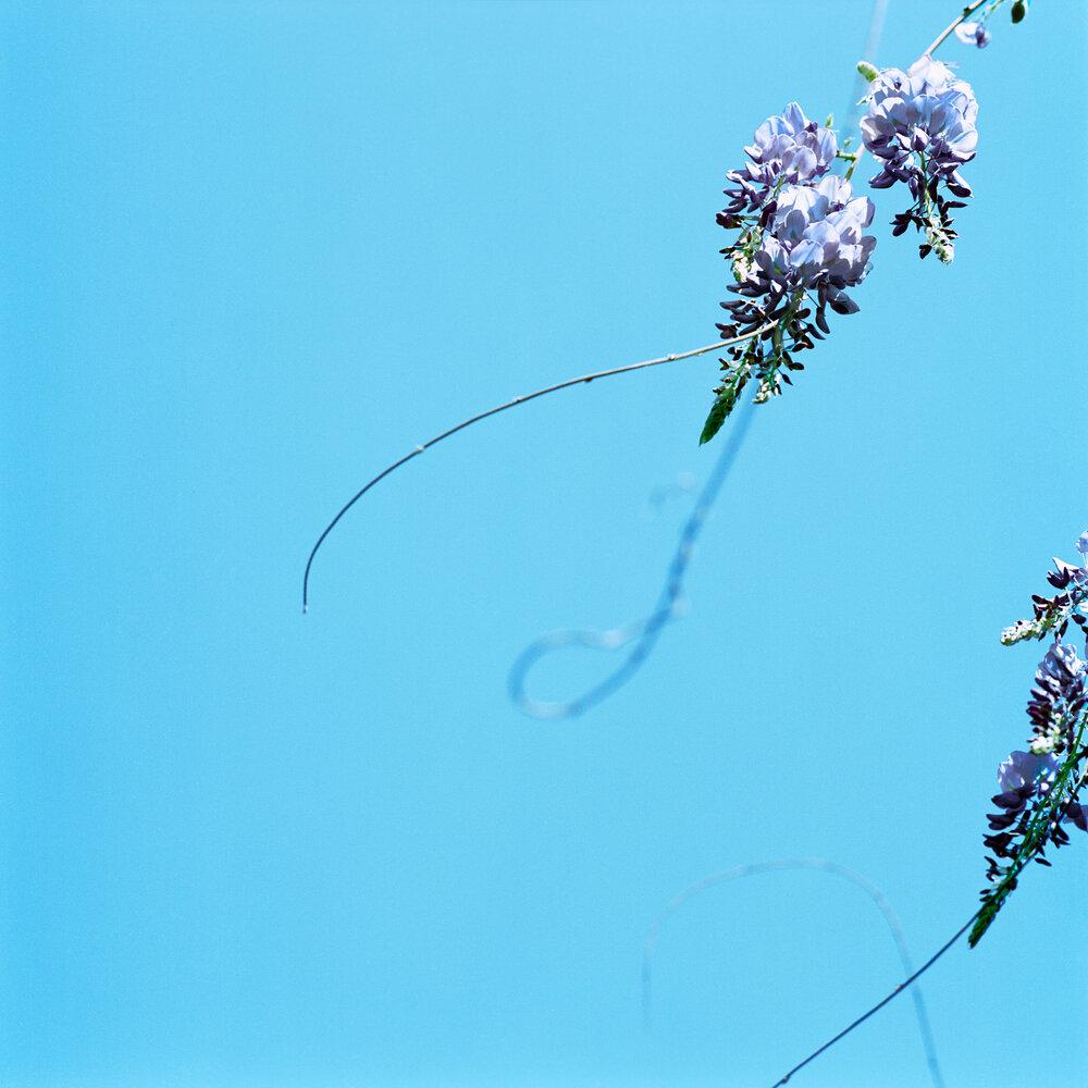 Blossom #16, 2005