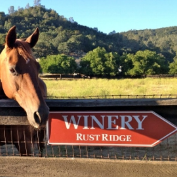 Rustridge Ranch and Winery  -  At the ranch, you can play tennis, bird watch, lounge in the sun, jog, relax in a eucalyptus sauna, barbecue, or hike to your hearts content through the vineyards and hills.