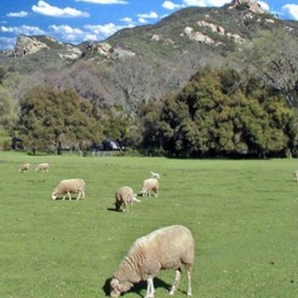 Rinconada Dairy  -Experience the typical ranch day while you work in the organic garden, observe the cheese making during milking season, feed the sheep and goats and perhaps help mild the lamb.
