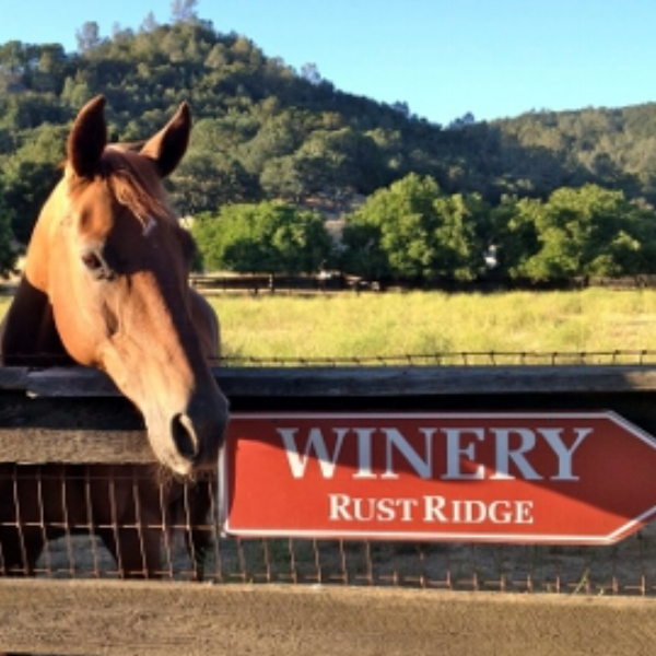 Rustridge Ranch and Winery  - The amenities include comfortable bedrooms with queen size featherbeds, private bathrooms, decks, a large open beamed living room with a fireplace and a sunlit breakfast room.