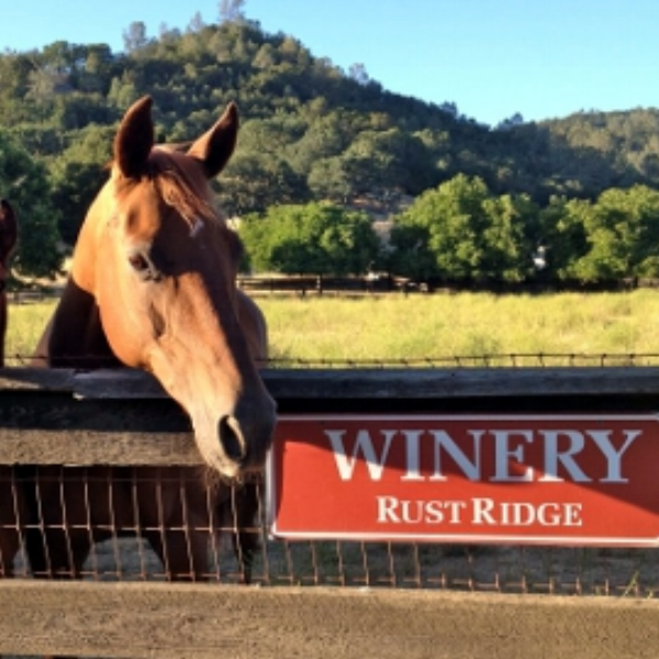 Rustridge Ranch and Winery  - The amenities include comfortable bedrooms with queen size featherbeds, private bathrooms, decks a large open beamed living room with a fireplace and a sunlit breakfast room.