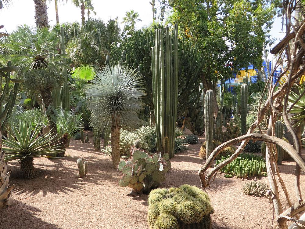 Marrakesh Majorelle Garden - Joan.jpg