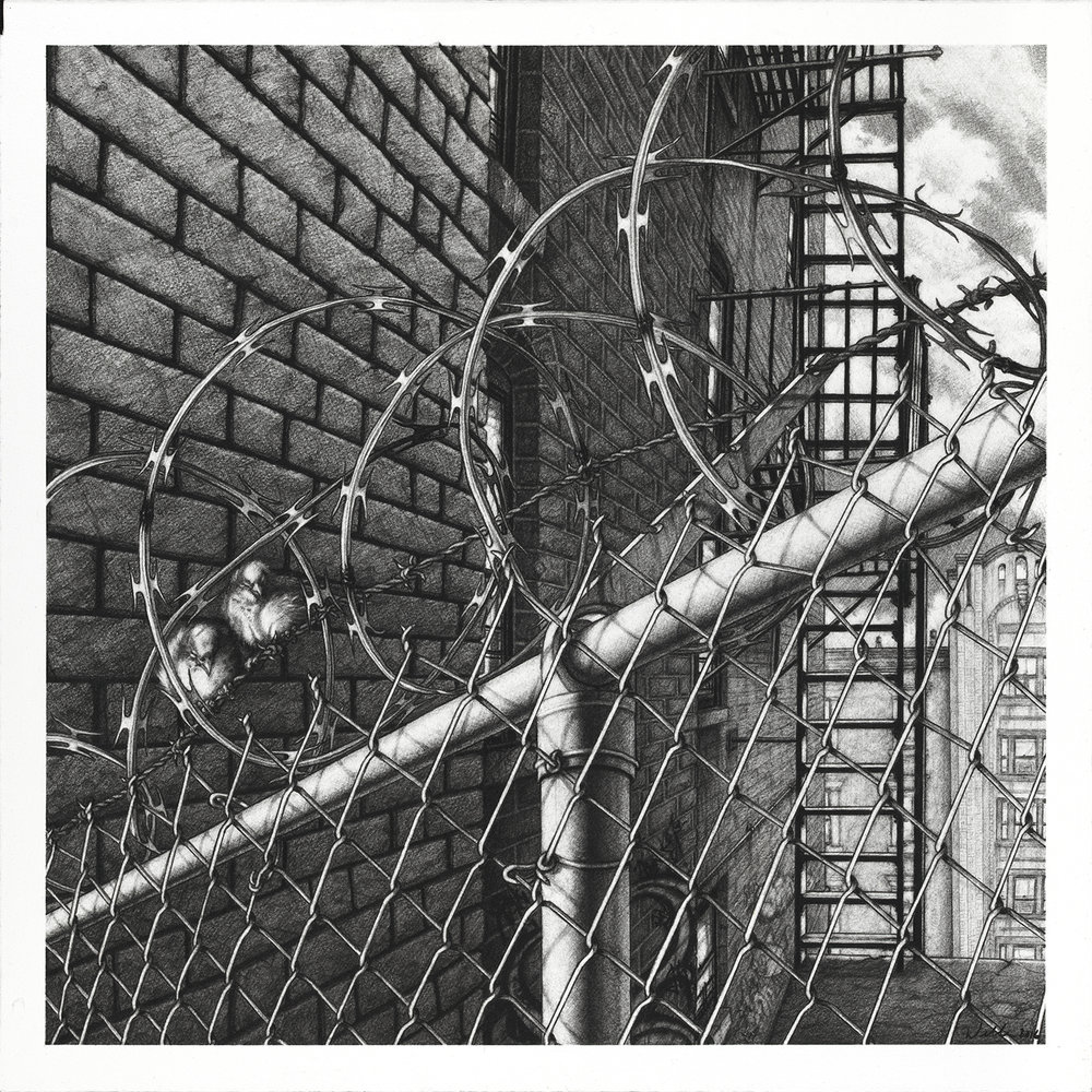 "Razor Wire  |  Charcoal on Paper  |  24"" X 24""  