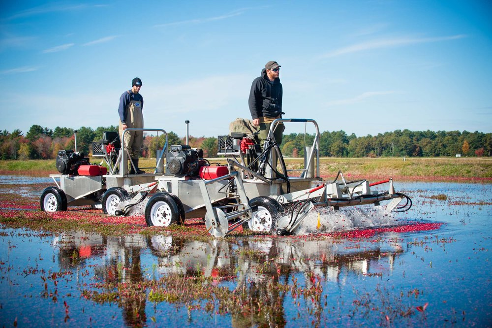Maura Wayman Photography, Photography, Corporate Photography, stock, stock images, Massachusetts, Boston, Metro West, Wellesley, Cranberries, berries, berry, cranberry, red, red berries, farmer, harvest, field, machine, farming machine, water, Cape Cod, cranberry harvest, fall, two men,