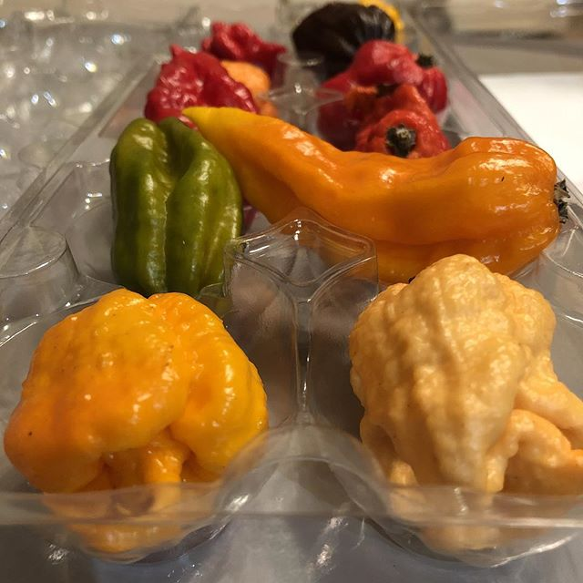 We're at hard work eating the world's hottest peppers, in preparation for our upcoming Midwest tour in November. Stay tuned for dates!!! #yellowstoneapocalypse #hotpeppers #clevelandrocks