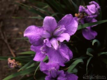 Virginia-Aileen-Vandeway-Spaulding-8.jpg