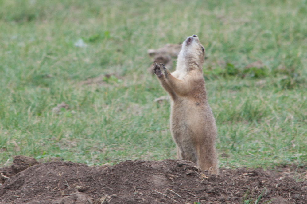 journal-keeping-prairie-dog