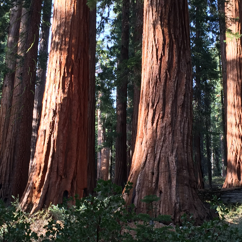 journal-keeping-4-sequoias