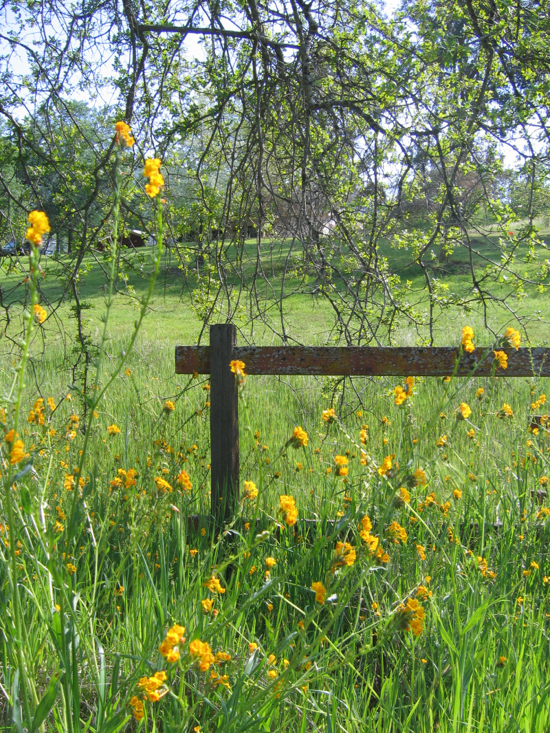 Fence and wild flowers