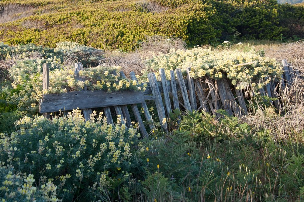 sea-ranch-toppled-fence