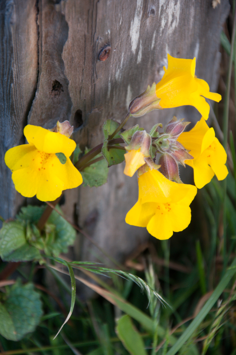 flowers-against-fence