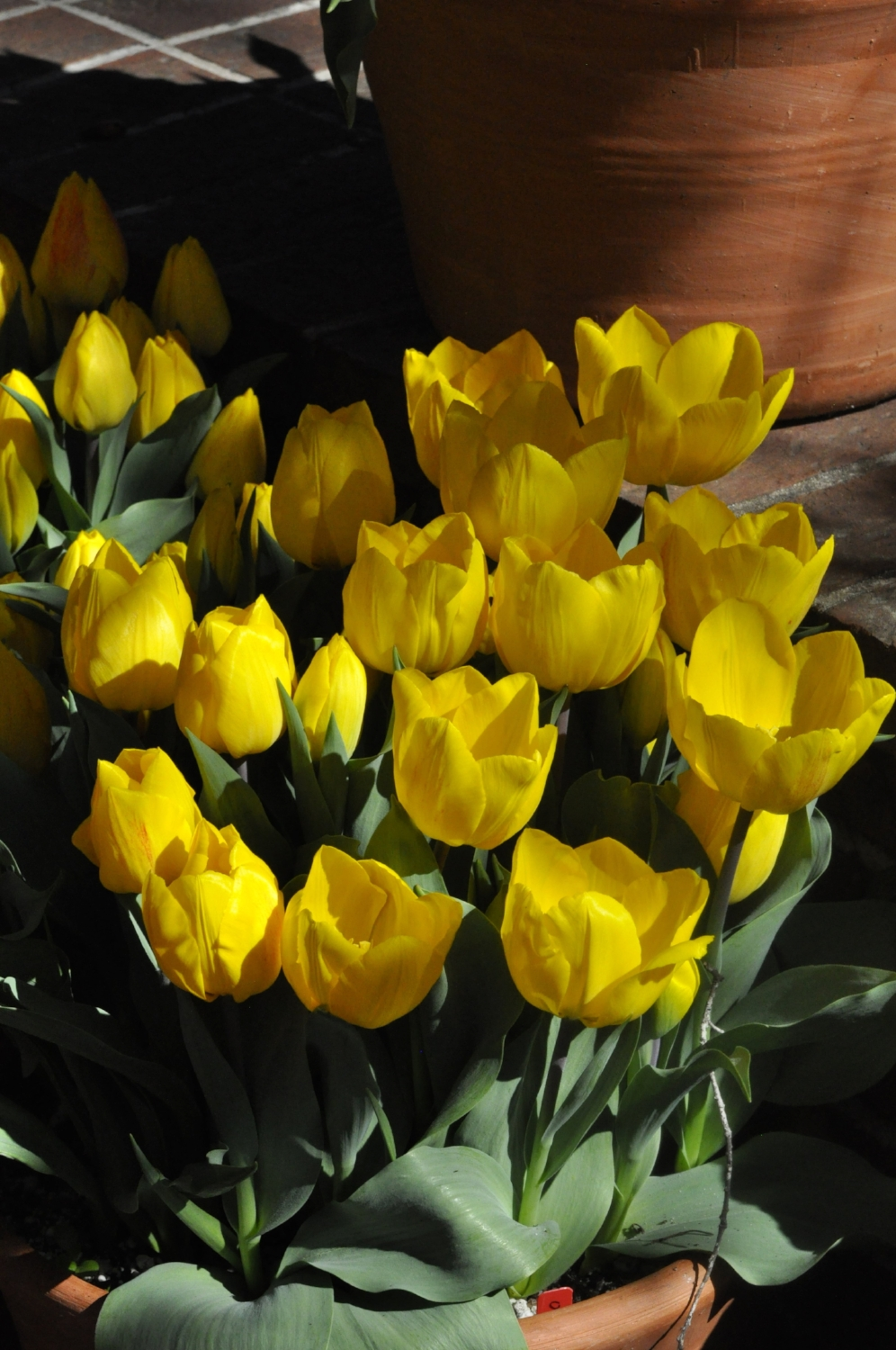 journalkeeping.org-pot of yellow tulips