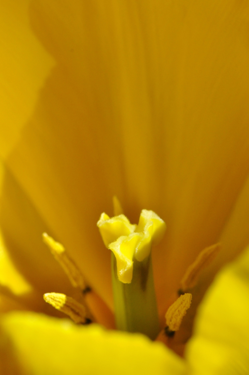 journalkeeping.org yellow tulip closeup