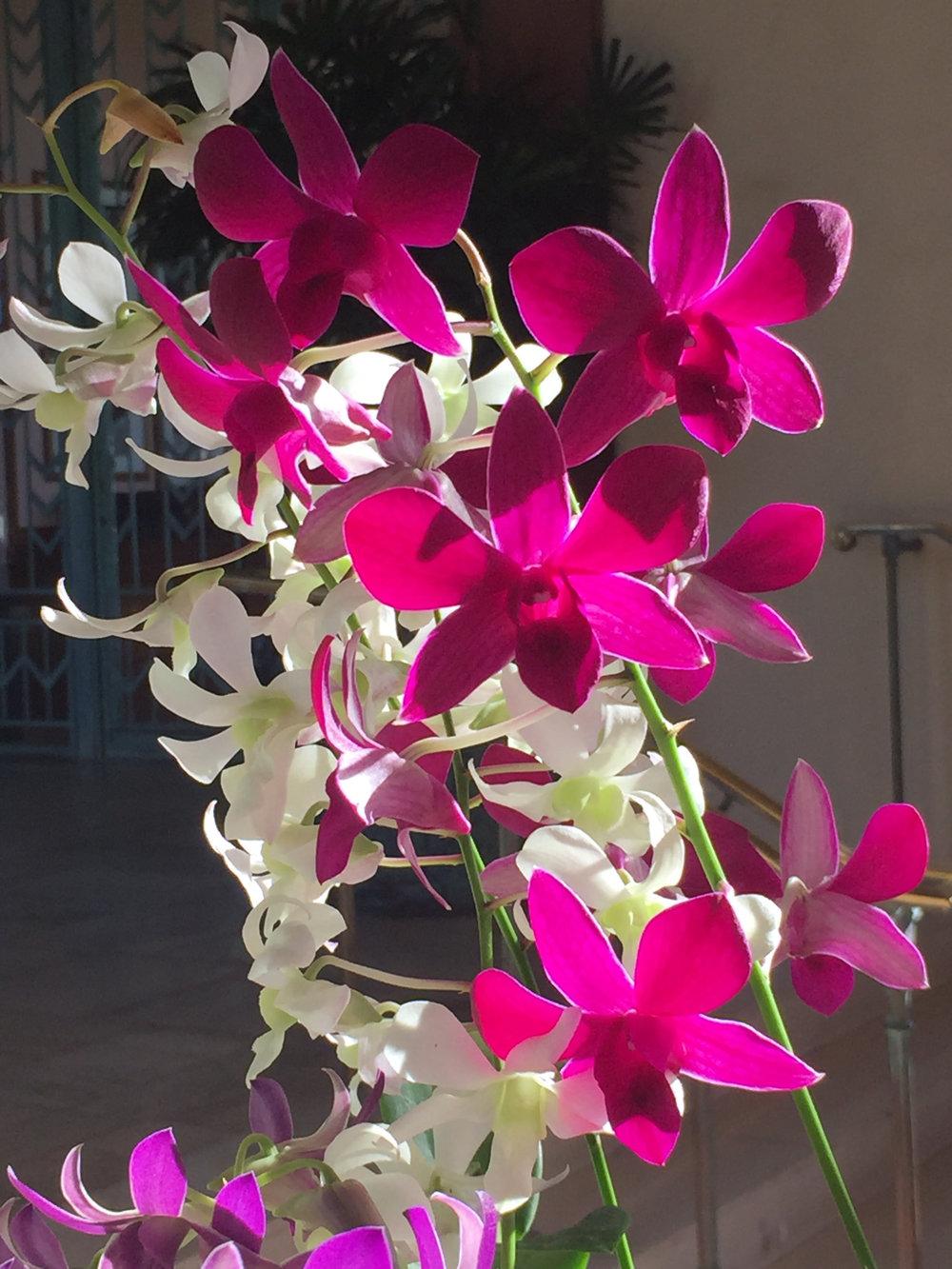 orchids-hyatt-kauai.jpg