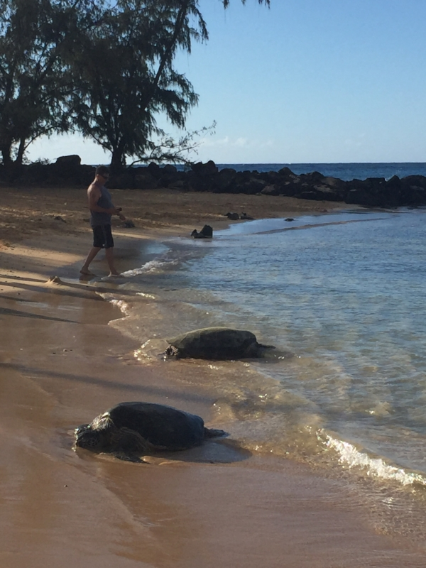 two-sea-turtles-poipu-beach-kauai.jpg