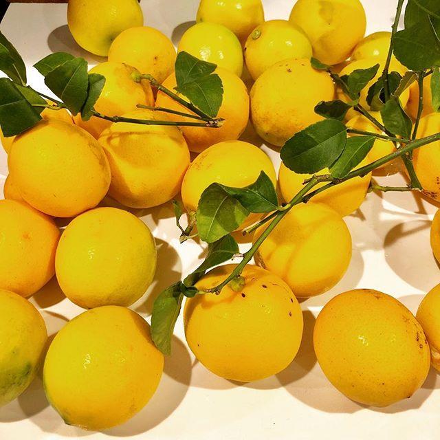 When neighbors give you lemons...zest them for lemon cranberry scones!