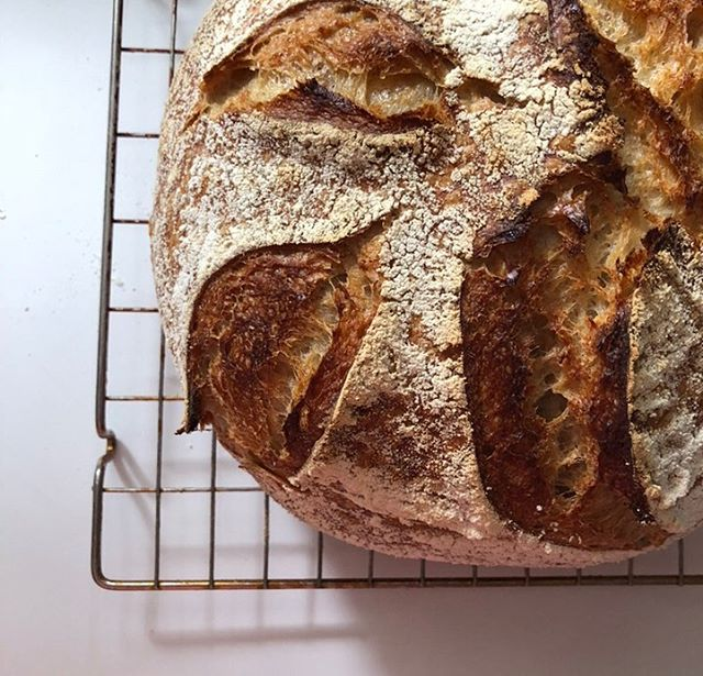This is our last week of baking bread! Get all orders in by the evening of the 19th because pick up day is on the 20th.  Our menu is filled with all the goods. Cinnamon and dinner rolls, scones, granola, and so many different types of bread to make this Christmas the yummiest one yet!  Each purchase will come with a free t-shirt (yes, you heard that correctly), but don't forget about the other great gift ideas available on our website, too. We still have plenty of Rwandan ornaments and Breakfast Boxes to give out.  In the hustle and bustle of the holiday season, remember that all proceeds from FBB go to benefit vulnerable children in Rwanda. Let's make this Christmas good for all✨  Visit our website at fedbybread.org.