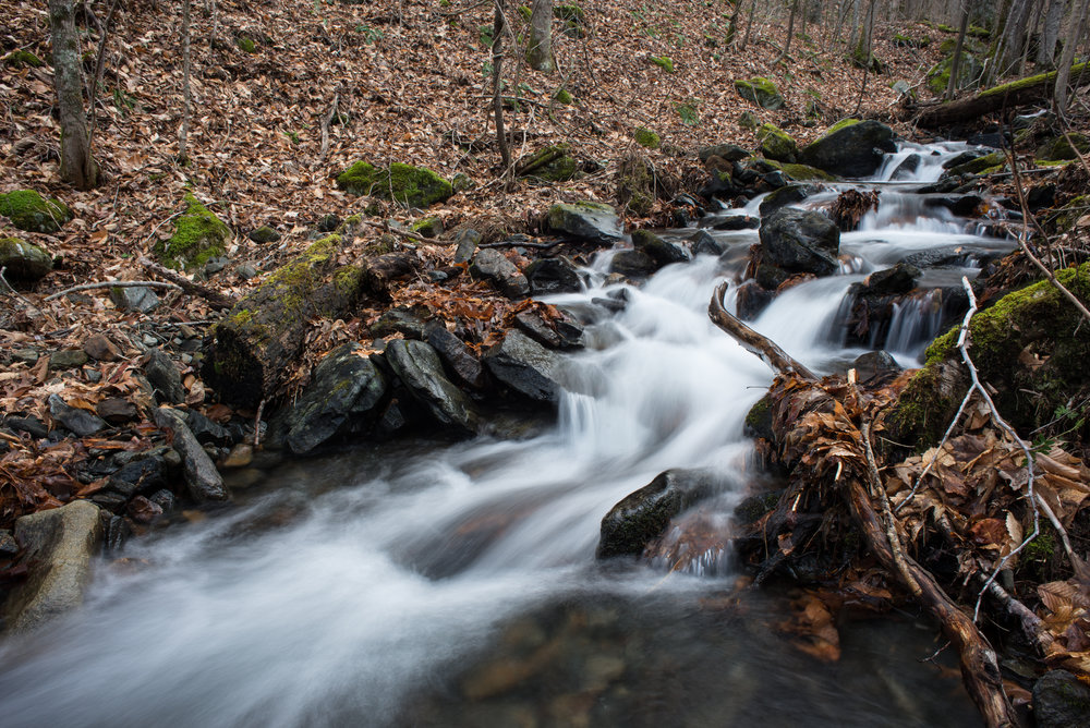 The head waters of the New River, Elk Knob State Park's Backcountry Trail.